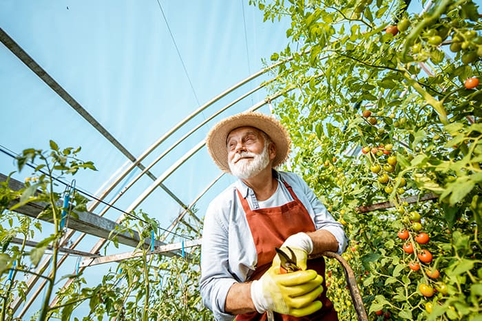 Older man gardening in greenhouse
